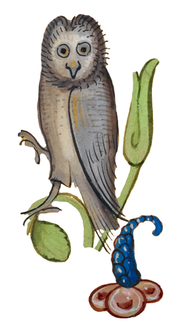 Medieval owl
